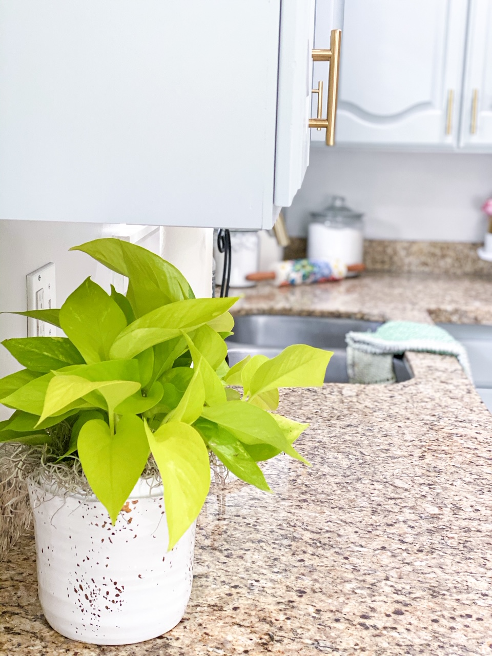added_neon_pothos